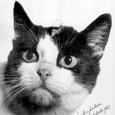 1963'te Uzaya Çıkan İlk Kedi Olarak Catstronaut Ünvanını Alan Kedi: Felicette