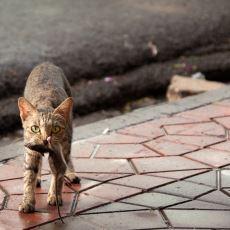 İstanbul, Veba Salgınından ve 90'lardaki Fare İstilasından Kedileri Sayesinde mi Kurtuldu?