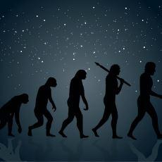 İki Ayak Üzerinde Durmanın Avantajları ve Dezavantajlarına Evrimsel Bir Bakış
