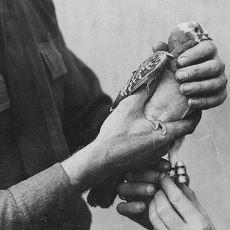 I. Dünya Savaşı'nda 194 Kişinin Hayatını Kurtaran Kahraman Güvercin: Cher Ami