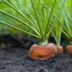 Evde Sebze Yetiştirmek İsteyenlere Tavsiyeler