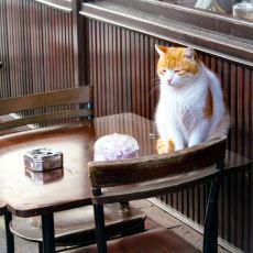 Bir İlçenin Yaşanır Olup Olmadığını Anlayabilme Şekli Olarak: Kedi