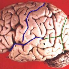 Beynimizin Sadece %10'unu mu Kullanabiliyoruz?