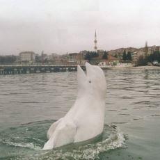 1992'de Sinop'a Gelerek Ülkenin Sevgilisi Olan Unutulmaz Hayvan: Balina Aydın