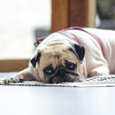 Köpeklerin Masum Bakışlarının Ardında Yatan Hiç de Masum Olmayan Sebepler