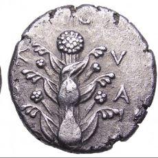 Antik Çağ'da Doğum Kontrol Yöntemi Olarak Kullanılan Bitki: Silphium