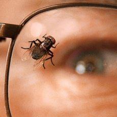 Breaking Bad'i Breaking Bad Yapan Detaylardan Biri Olan Sinekli Bölüm: Fly