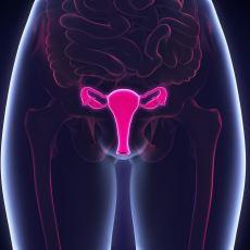 Sadece Kadınlarda Görülen Menopoza Neden Erkekler de Girmiyor?