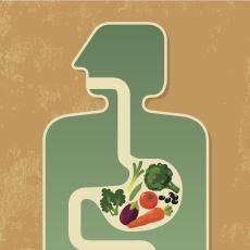 Yiyip İçtiklerimizin Ağızdan Anüse Olan Yolculuğu: Sindirim Sistemi
