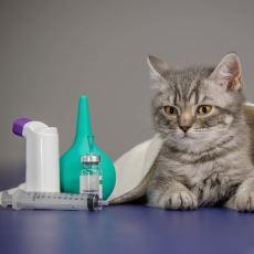 Kedi Bakımında Veterinere Götürmeden de Yapılacak Alternatif Uygulamalar
