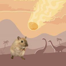 Yarın Dünya'ya Meteor Düşse, Hayatta Kalacak Hayvanlardan Biri Neden Yine Fareler Olur?