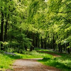 Doğal Ormanlarda Kendiliğinden Var Olabilen Klima Sistemi