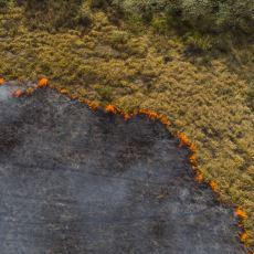 Orman Yangınının Önünü Kesmek İçin Kullanılan Bir Yöntem: Karşı Ateş