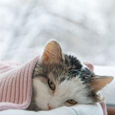 Kediler İçin En Büyük Tehditlerden FIP Hastalığı Nedir?