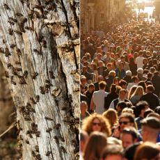 """""""Karıncalar mı Daha Ağır İnsanlar mı?"""" Sorusuna Kesin Cevabı Veren Bir Ağırlık Karşılaştırması"""