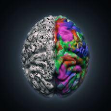 Beyninde Görmeyi Sağlayan Bölümü Olmadan Görebilen Mucize Bebek
