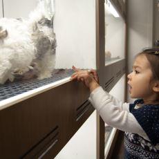 Yeni Yasayla Birlikte Artık Pet Shoplarda Kedi ve Köpek Satılamayacak