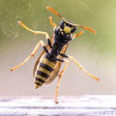 Arılar Neden Yaz Sonu Daha Saldırgan Olur?