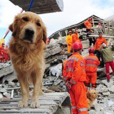Bazı Hayvanlar Nasıl Oluyor da Depremi Önceden Hissedebiliyor?
