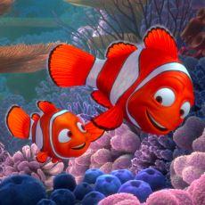 Kayıp Balık Nemo'nun Babasının Sidney'e Kadar Yüzmesinin İmkansız Olması