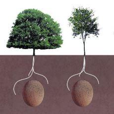 Cansız Bedenlerin Ağaçlarda Hayat Bulduğu Proje: Capsula Mundi