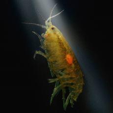 Ele Geçirdiği Canlıları Adeta Zombilere Dönüştürerek Akıllara Durgunluk Veren Parazit Türleri