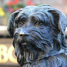 Benzersiz Sadakatiyle Bütün İskoçya'nın Kalbinde Yer Etmiş Köpek: Greyfriars Bobby