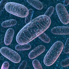 Bugün Yaşayan Tüm İnsanların Anne Soyundan En Yakın Ortak Atası: Mitokondriyal Havva