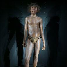 Yaklaşık 2 Milyon Yıl Önce Yaşamış Olan Çalışkan Bir İnsanımsı: Homo Ergaster