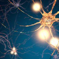 Hafıza Nakli Konusunda İlginç Bir Çalışma: Beyinsiz Öğrenme Teorisi