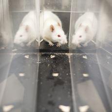 Hayvanların Hazıra Konmak Yerine Emekle Kazandıkları Yiyeceği Tercih Etmesi: Asalak Karşıtlığı