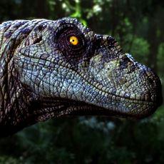 Diğer Etobur Dinozorların da Korktuğu Bir Dinozor Türü: Velociraptor