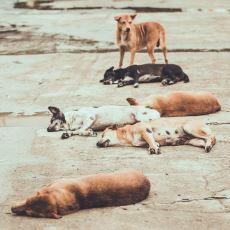 Sokak Köpeklerinin Gazabına Karşı Babasının Tavsiyesine Uyan Gencin Tatlı Hikayesi