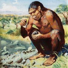 İnsan Evriminin İlk Basamağı: Alet Kullanarak Devrim Yaratan Homo Habilis