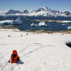 Hiç Kutup Ayısının Bulunmadığı Antarktika Hakkında Merak Edilenler