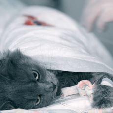 Kedilerde Kısırlaştırma Süreci Nasıl İlerliyor?