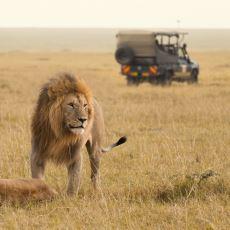 Vahşi Hayvanları ve Yerel Halkıyla Belgeselcilerin Vazgeçilmezi: Masai Mara