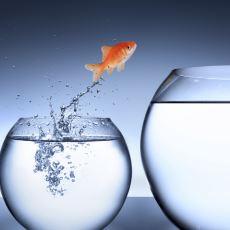 Başarısızlığın İnsanın Kafasında Başlayan Bir Şey Olduğunu Gözler Önüne Seren Bir Deney