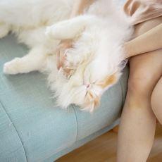 Kedi Tüyü Akciğerde Kist Yapar mı?