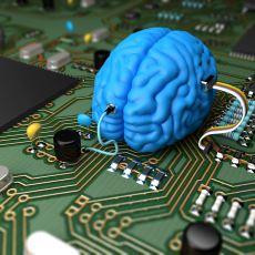 Beyne Dair Hafıza, Öğrenme ve Zekâ Gibi Başlıca Soru İşaretlerinin Cevabı: Nöroplastisite