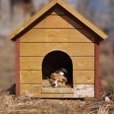 Köpek Kulübesi Nasıl Isıtılır?