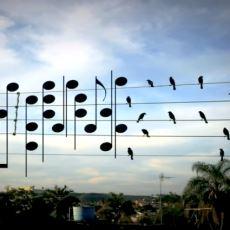 Elektrik Tellerine Dizilmiş Kuşların Notaya Uyarlanmasıyla Ortaya Çıkan Müzik