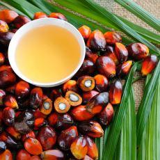 Üretim Şekliyle Orangutanları, Besin Değeriyle İnsan Hayatını Tehdit Eden Yağ Türü: Palm