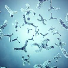 Ölümsüzlüğün Sırrını Arayan İnsanlığı Cevaba Bir Adım Daha Yaklaştıran Yapı: Telomer