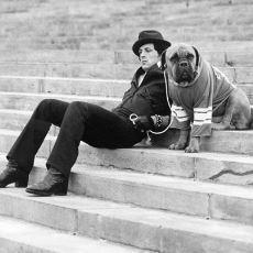 Rocky'de Sylvester Stallone ile Beraber Oynayan Köpeğin İlginç Öyküsü