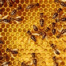 Arıların Başındaki Belalar ve Bunun Tüm İnsanlığı Etkileyecek Korkunç Sonuçları