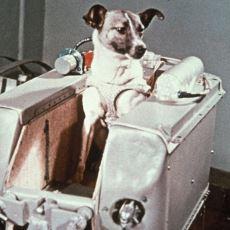 60 Yıl Önce Dünya Yörüngesine Oturan ve Orada Ölen İlk Canlı: Layka