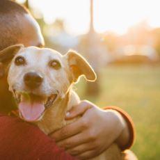 Evcil Köpek ve Maymunların İnsanları Yardımseverliğine Göre Ayırmaları