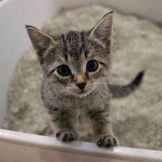 Kedi Kumu Temizlemekle Uğraşmayı Sevmeyenler İçin Otomatik Kutu Önerileri