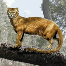 Kedilerin Katil Olarak Başlayan Hayatları Nasıl Oldu da Minnoş Bir Hal Aldı?